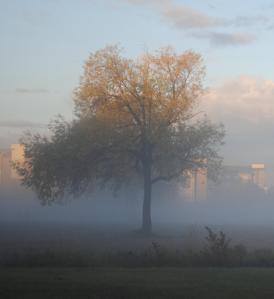 foggy field 1--detail