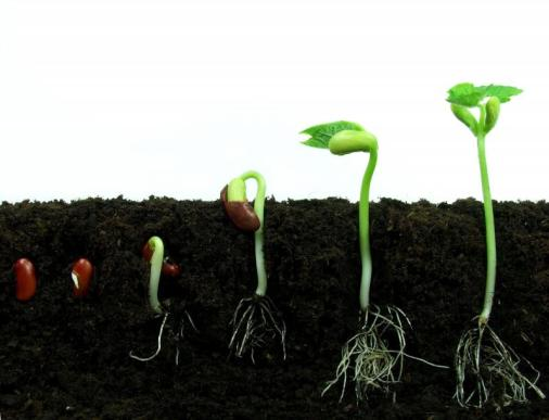 seed-to-plant